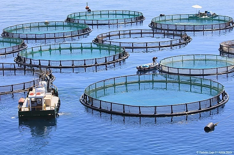 GloFouling project is pleased to announce a series of free of charge webinars: Impacts Of Biofouling In Marine Aquaculture on Thursday, 30 January 2020
